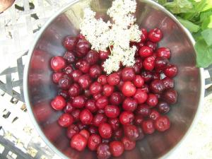 Cherries and Elderflowers