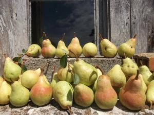 Pears in August