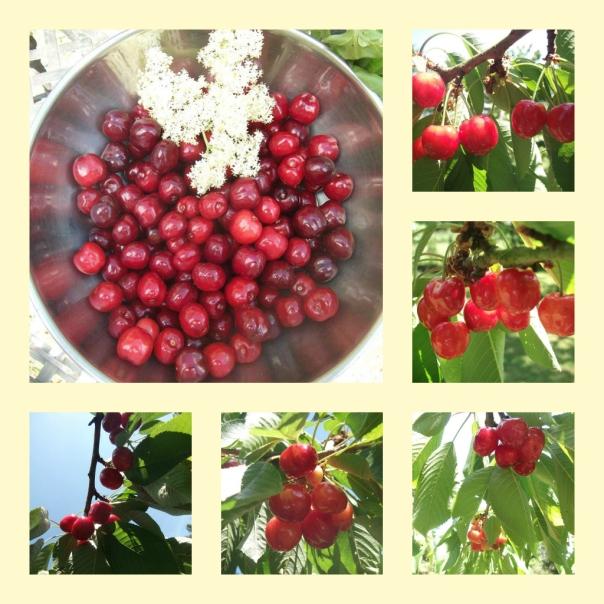 cherries2011