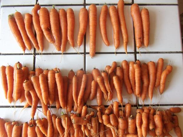 Carrots - Lady Justine's blog