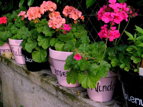 flowersLJ