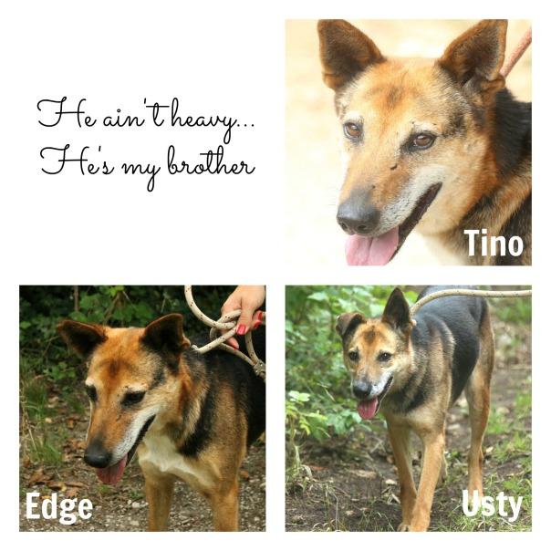 Usty Tino Edge