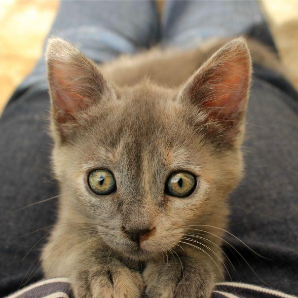 kittie3