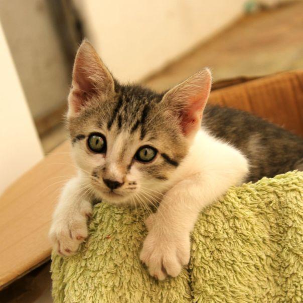 kittie4